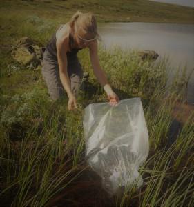 Kvikne utmarksråd driver et eget settefiskanlegg hvor det produseres en-somrig yngel for lokalt utsett.
