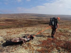 I oppsynsrapportene for Forollhogna og Knutshø finner du mye interessant informasjon om villreinbestandene.